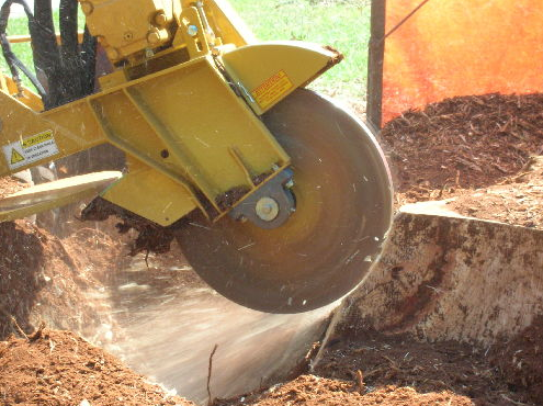 Stump Grinding Palm Beach County, FL