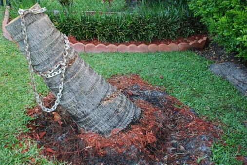 Tree Removal Services Palm Beach County, Florida